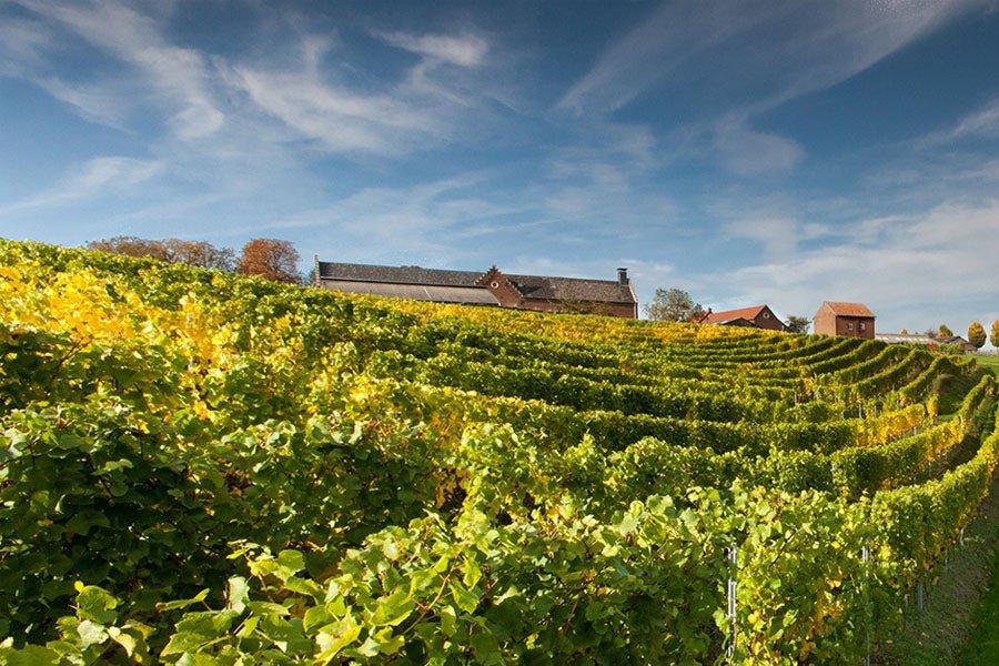 Wijngaardsberg (Nederland)